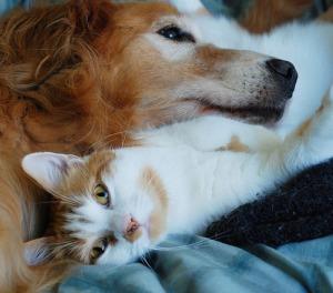 опухоль молочной железы у кошек и собак