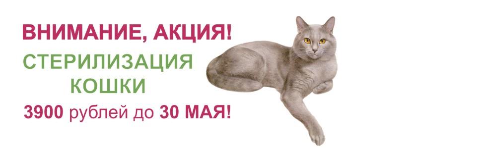 akciya_sterilizaciya_baner_2